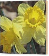 Daffodils In Spring Wood Print