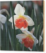 Daffodils Spring Is Here Wood Print