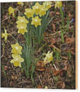 Daffodils With A Purple Flower Wood Print