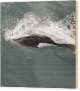 Dahl Dolphin Wood Print