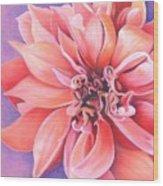 Dahlia 2 Wood Print by Phyllis Howard