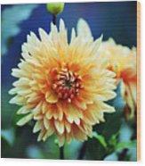 Dahlia Beauty Wood Print