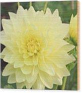 Dahlia Blossom Yellow Wood Print