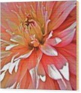Dahlia Blush Wood Print