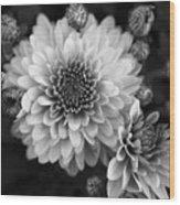 Dahlia Burst B/w Wood Print
