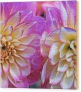 Dahlia Cousins Wood Print