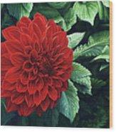 Dahlia Dawn Wood Print