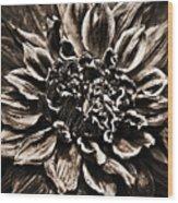 Dahlia De Pierre Wood Print