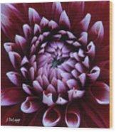 Dahlia Deep Maroon And While V1 Wood Print