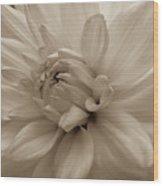 Dahlia Detail Wood Print