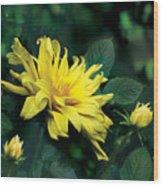 Dahlia Dream Wood Print