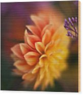 Dahlia Fireball Wood Print