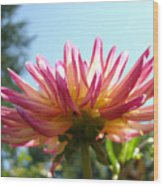 Dahlia Floral Garden Art Prints Canvas Summer Blue Sky Baslee Troutman Wood Print