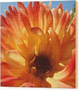 Dahlia Floral Orange Yellow Flower Botanical Art Prints Canvas Baslee Troutman Wood Print