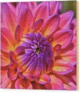 Dahlia Flower 017 Wood Print