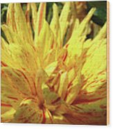 Dahlia Flower Art Collection Giclee Prints Baslee Troutman Wood Print