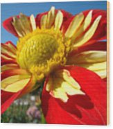 Dahlia Flower Art Prints Canvas Red Yellow Dahlias Baslee Troutman Wood Print