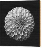 Dahlia  Flower Black And White Square Wood Print