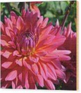 Dahlia Flowers Garden Art Prints Baslee Troutman Wood Print