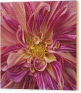 Dahlia Frenzy Wood Print