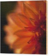 Dahlia Fueur Wood Print
