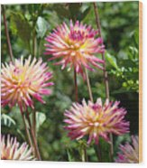 Dahlia Garden Floral Pink Yellow Botanical Landscape Baslee Troutman Wood Print