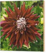 Dahlia In Bloom 18 Wood Print