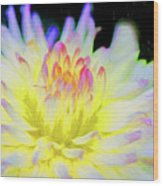 Dahlia In The Glow Wood Print