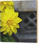 Dahlia Meditation Wood Print