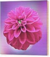Dahlia On Color Wood Print