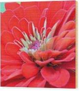 Dahlia Petals Wood Print
