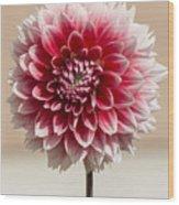 Dahlia- Pink And White Wood Print