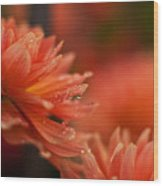 Dahlia Rainshower Wood Print