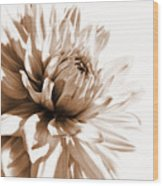 Dahlia Sepial Flower Wood Print