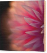 Dahlia Sunset Wood Print