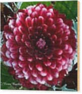 Dahlia Supreme Wood Print