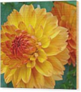 Dahlias Art Prints Orange Dahlia Flowers Baslee Troutman Wood Print