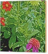 Dahlias By A Fence In Golden Gate Park In San Francisco, California  Wood Print