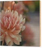 Dahlias Season Wood Print