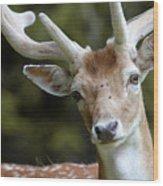Daim Haute Savoie Wood Print