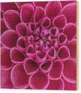 Dainty Dahlia Wood Print