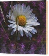 Dainty Daisy Wood Print