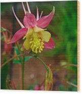 Dainty Flower Wood Print