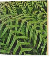 Dainty Fronds Wood Print