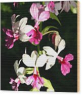 Dainty Orchids Wood Print