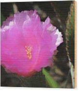 Dainty Pink Cactus Flower Wood Print