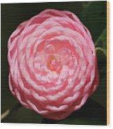 Dainty Pink Camellia Wood Print