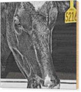 Dairy Cow Number 5216 Wood Print
