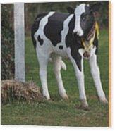 Dairy Cow Stature. Wood Print