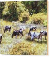 Dairy Cows In A Summer Pasture Wood Print